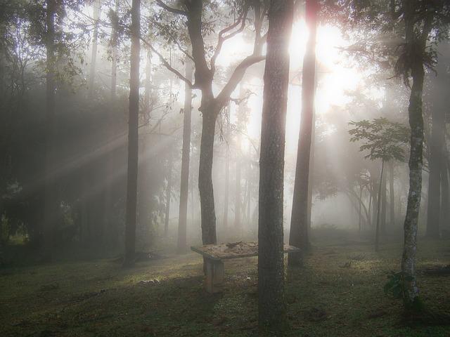 Foto dos raios de sol iluminando uma floresta